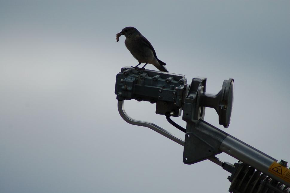 Download Free Stock HD Photo of Bluebird w/ worm on Satellite Dish Online