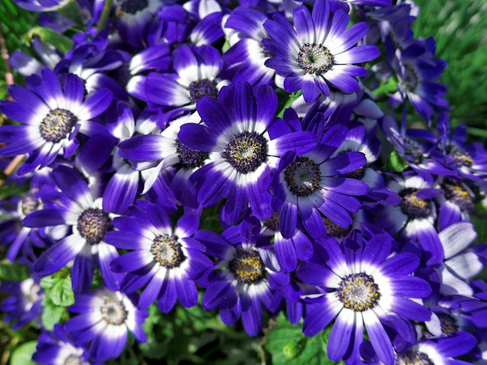 Download Free Stock HD Photo of Flowers Online