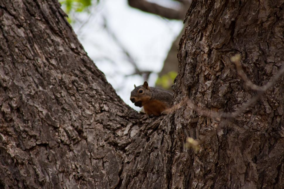 Download Free Stock HD Photo of Squirrel in a tree Online