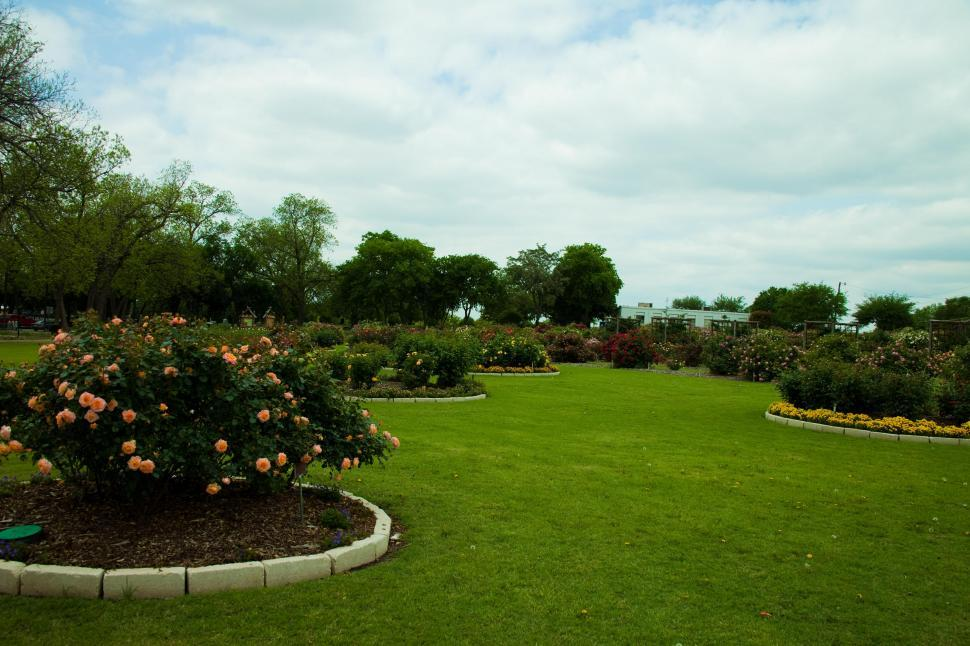 Download Free Stock HD Photo of Rose Garden Online