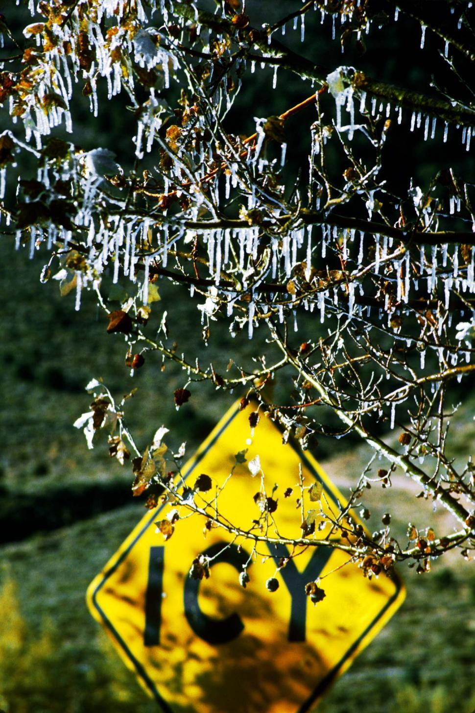 Download Free Stock HD Photo of Icy Roads sign with holes and frozen tree Online