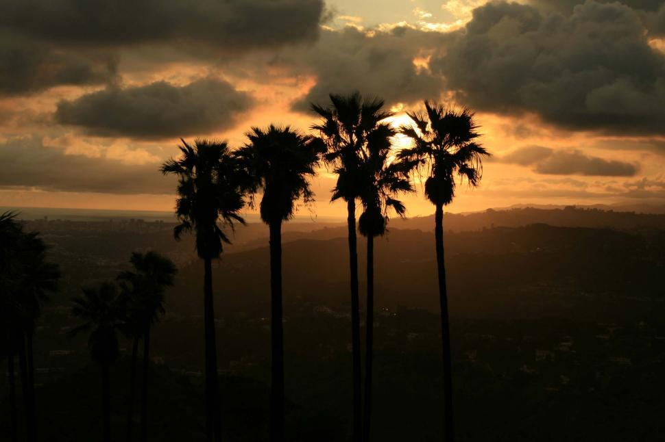 Download Free Stock HD Photo of Palms at Sunset Online