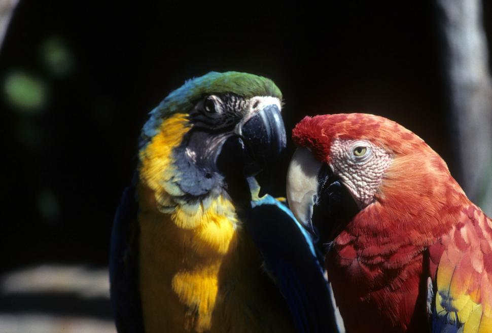 Download Free Stock HD Photo of Macaws Online