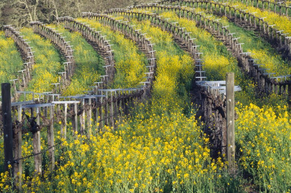 Download Free Stock HD Photo of Overgrown Vineyard Online