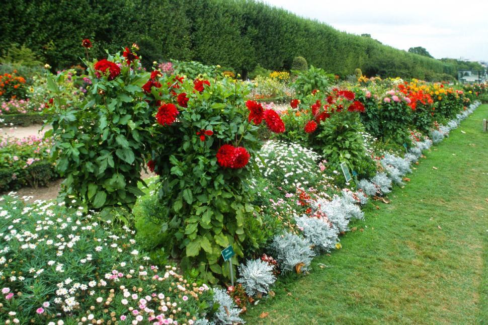 Download Free Stock HD Photo of Flower gardens in bloom Online