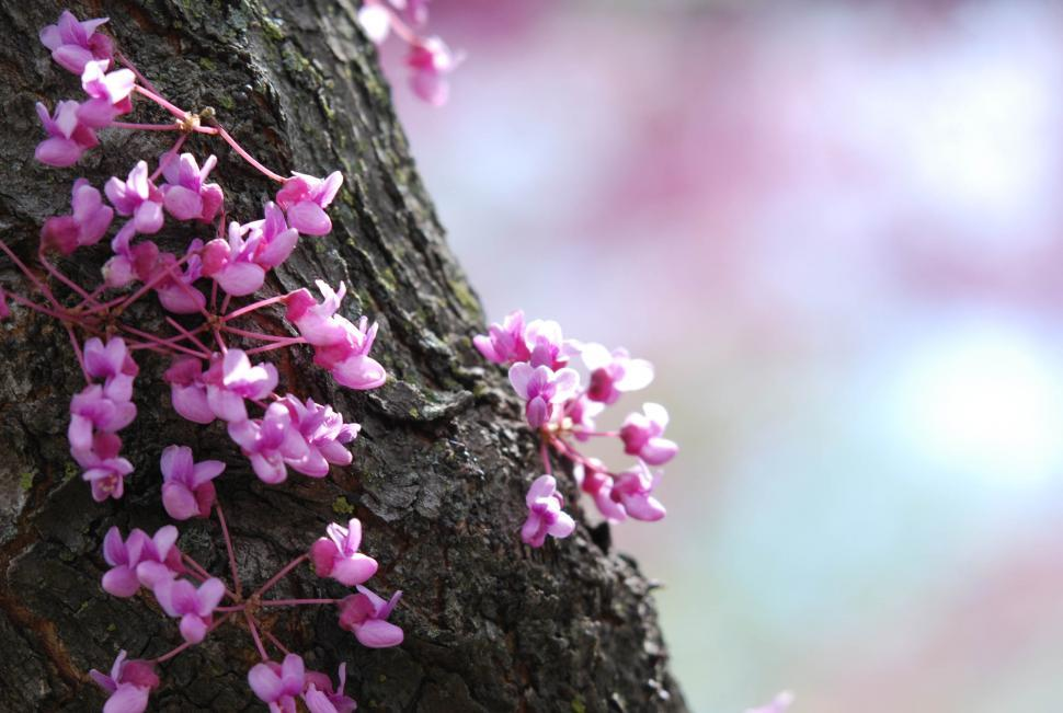 Get free stock photos of flowering tree trunk online download a tree trunk crawling with tiny flowers sprouting out of pink vines mightylinksfo