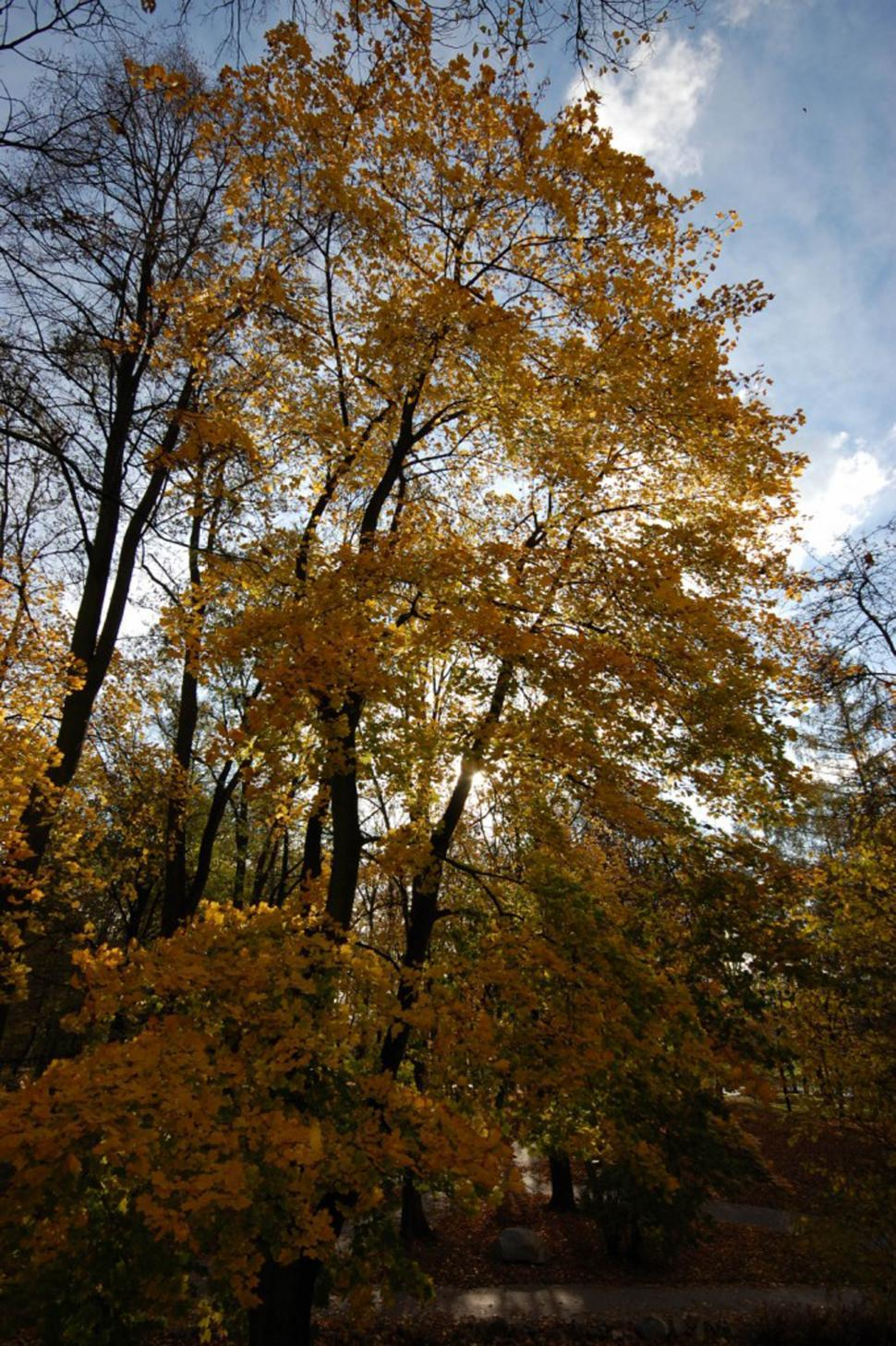 Download Free Stock HD Photo of Fall tree Online