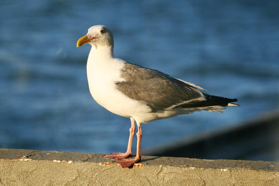 Download Free Stock HD Photo of Great, another seagull Online