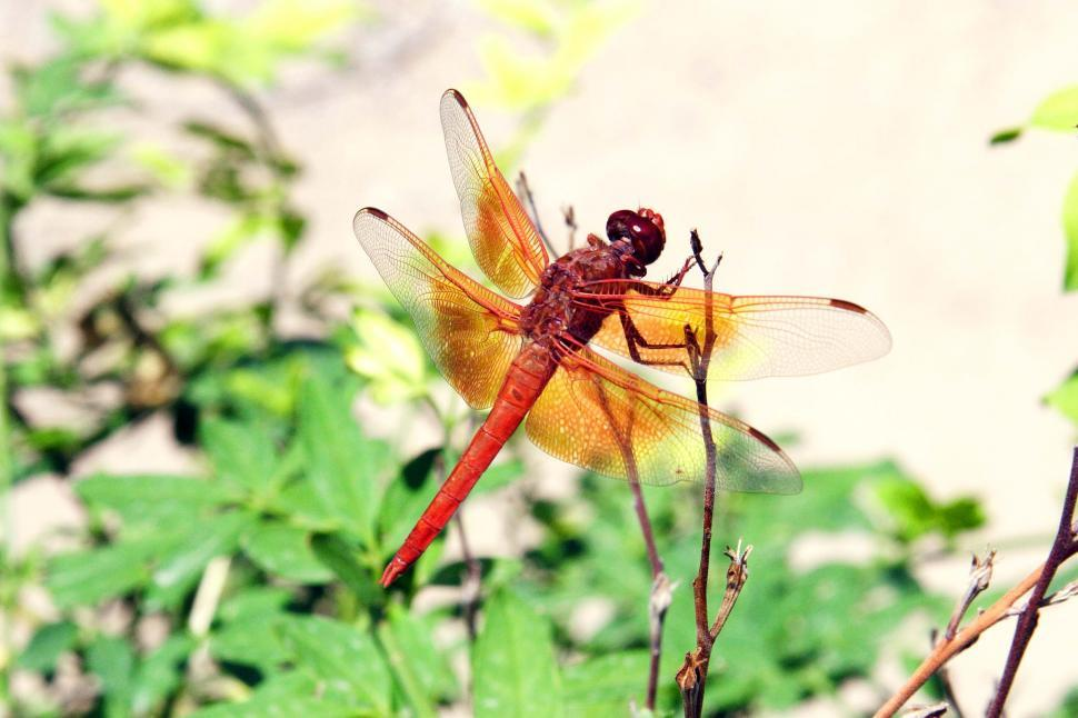 Download Free Stock HD Photo of Dragonfly on a small branch Online
