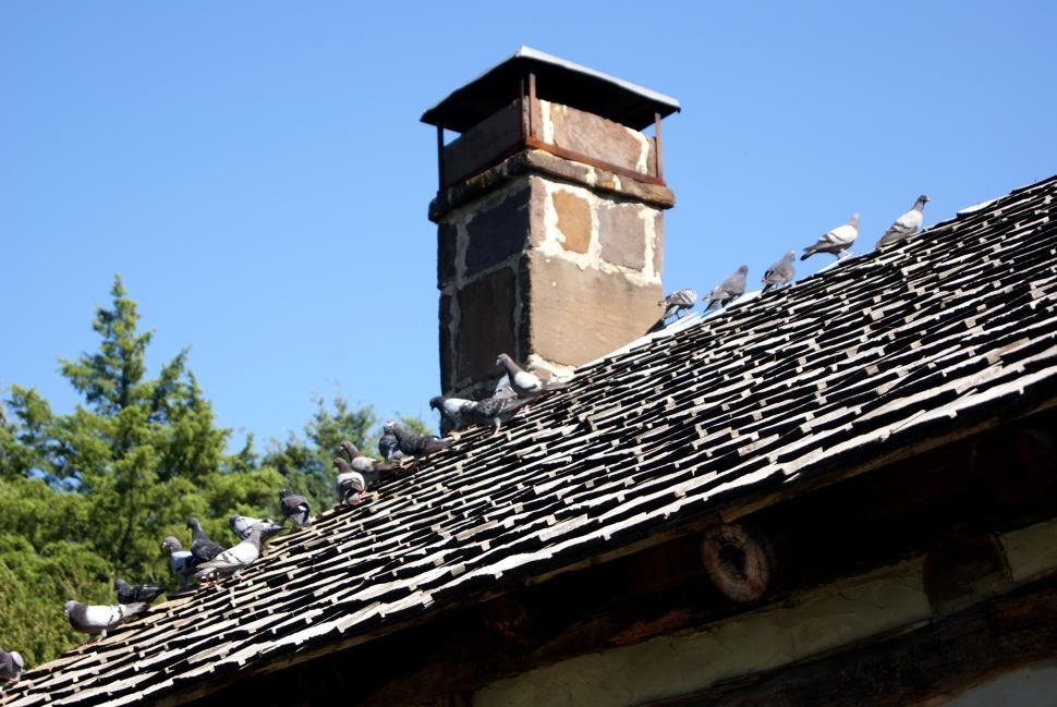 Download Free Stock HD Photo of Birds on the roof top Online