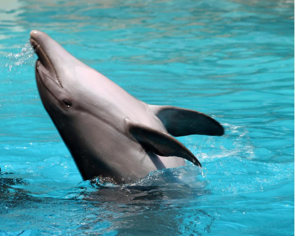 Download Free Stock HD Photo of Dolphin Online