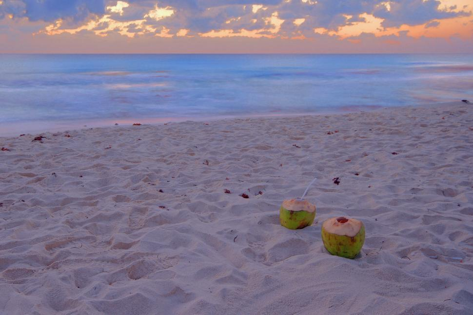 Download Free Stock HD Photo of Coconuts on the Beach Online