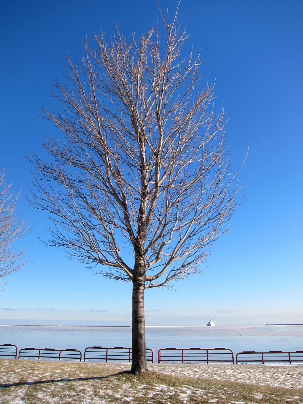 get free stock photos of bare tree online