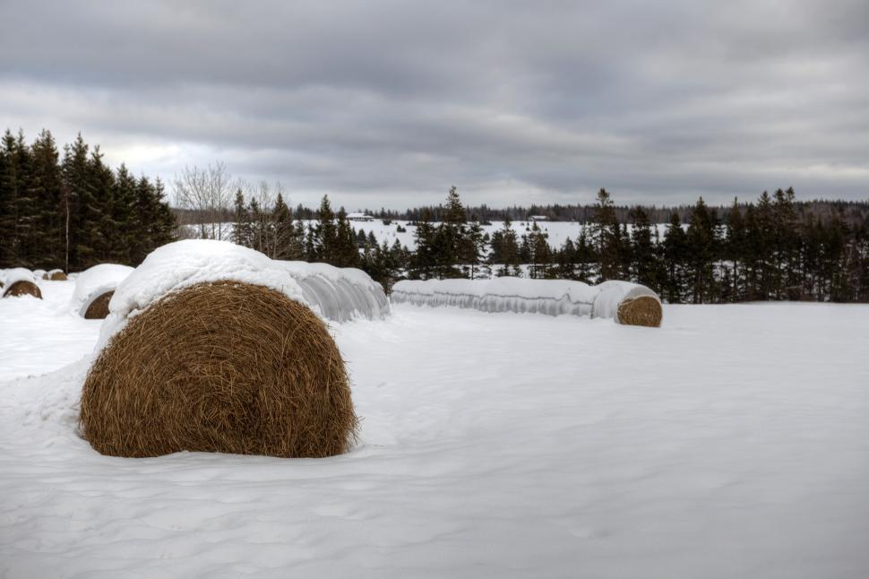 Download Free Stock HD Photo of Hay Online