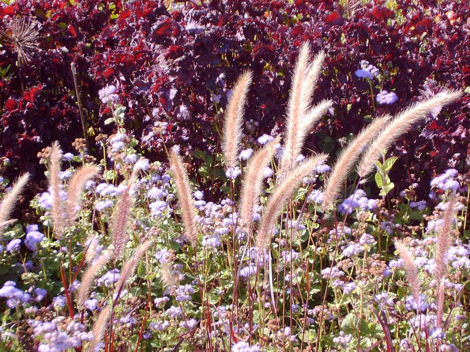 Download Free Stock HD Photo of Collection of various autumn flowers Online