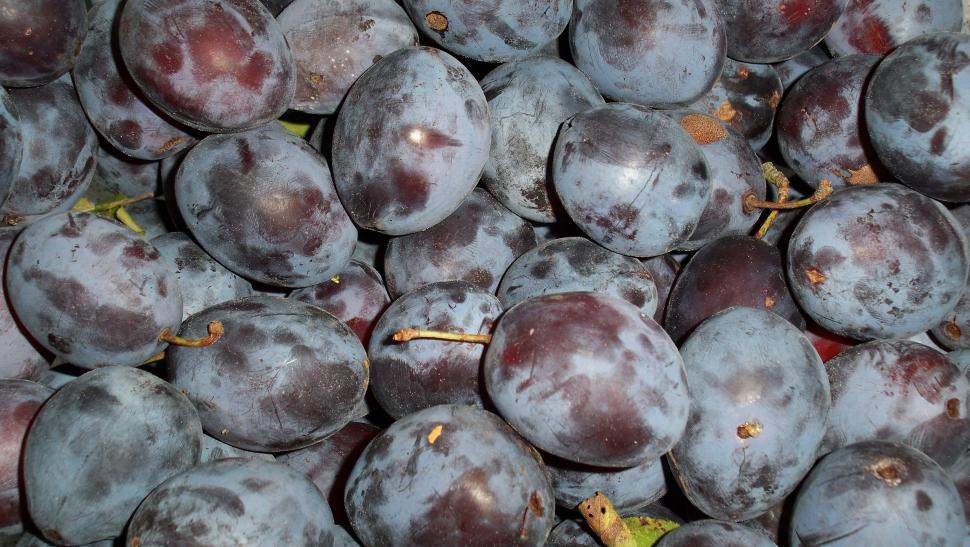 Download Free Stock HD Photo of Close-up of plums Online