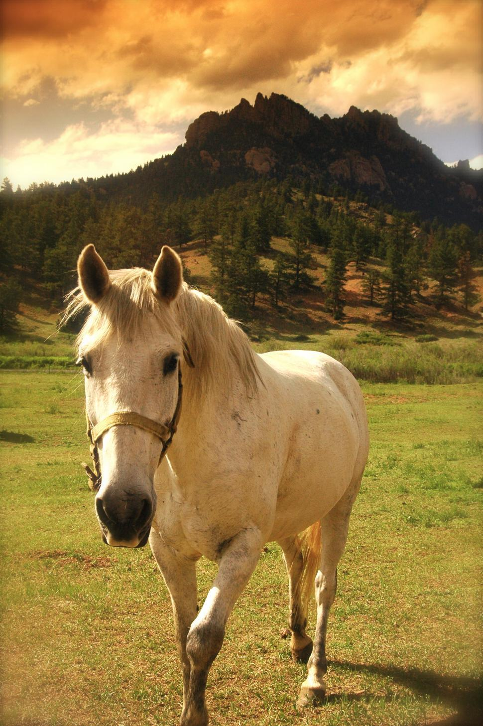 Download Free Stock HD Photo of Horse in the Rocky Mountains of Colorado Online