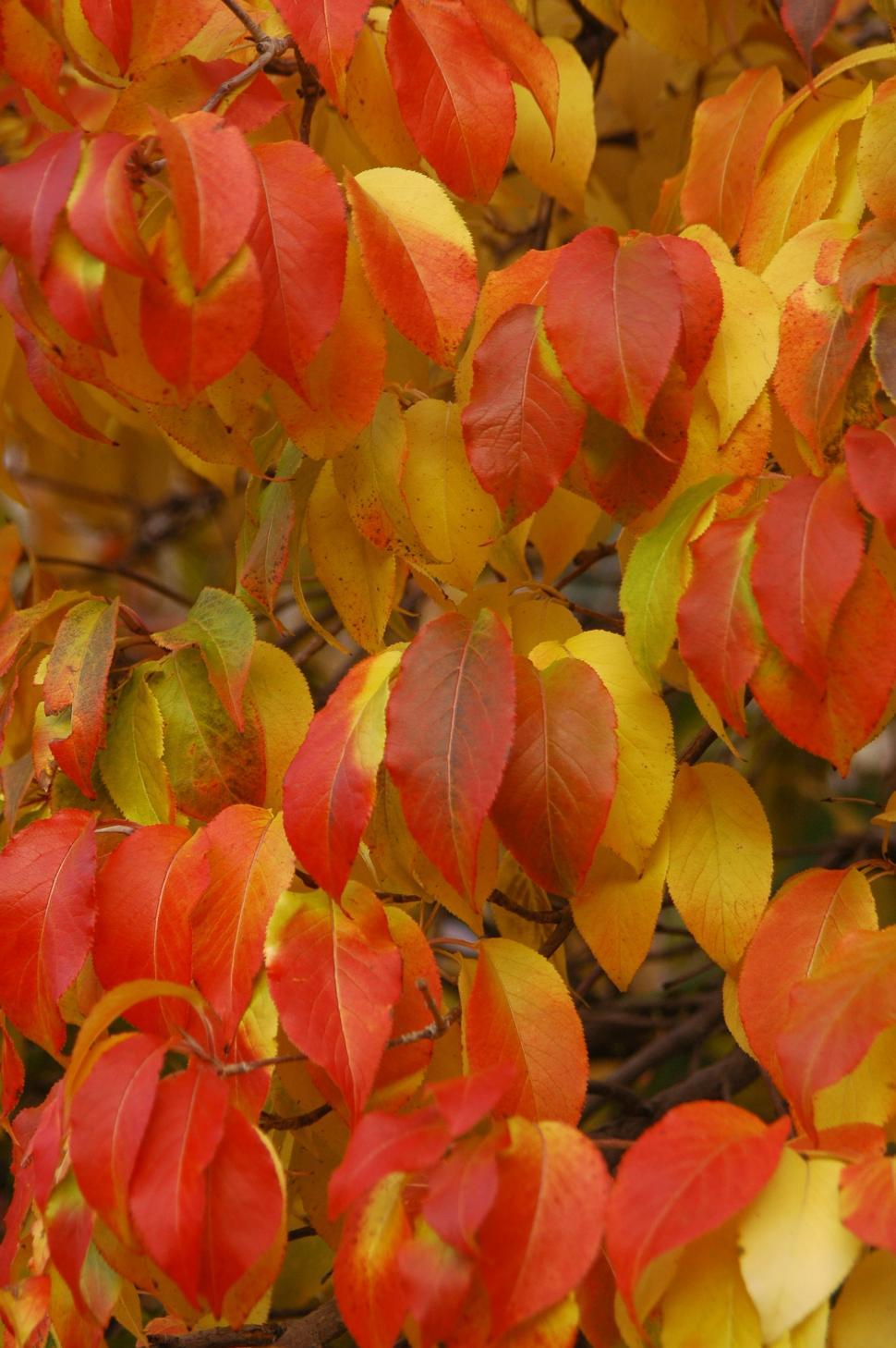 Download Free Stock HD Photo of Fall Foilage - Autumn Leaves Online