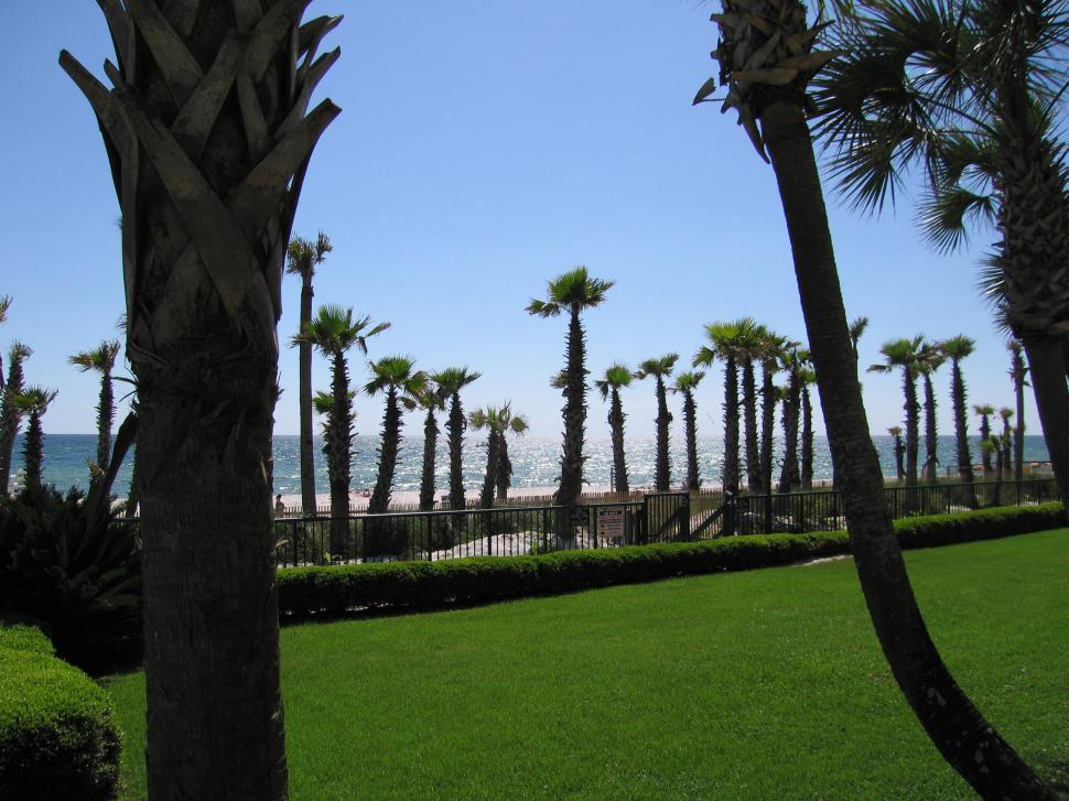 Download Free Stock HD Photo of Palm Trees and Oceanfront Online