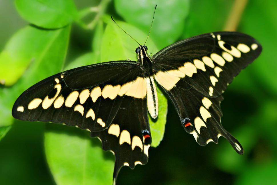 Download Free Stock HD Photo of Tiger swallowtail butterfly Online