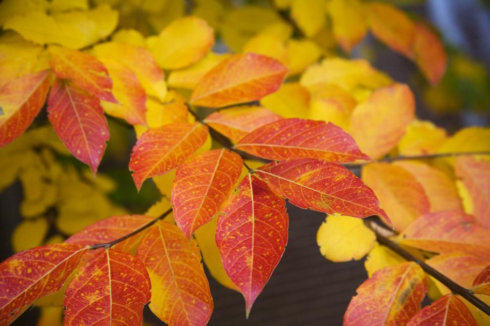 Download Free Stock HD Photo of Colorful Leaves Online