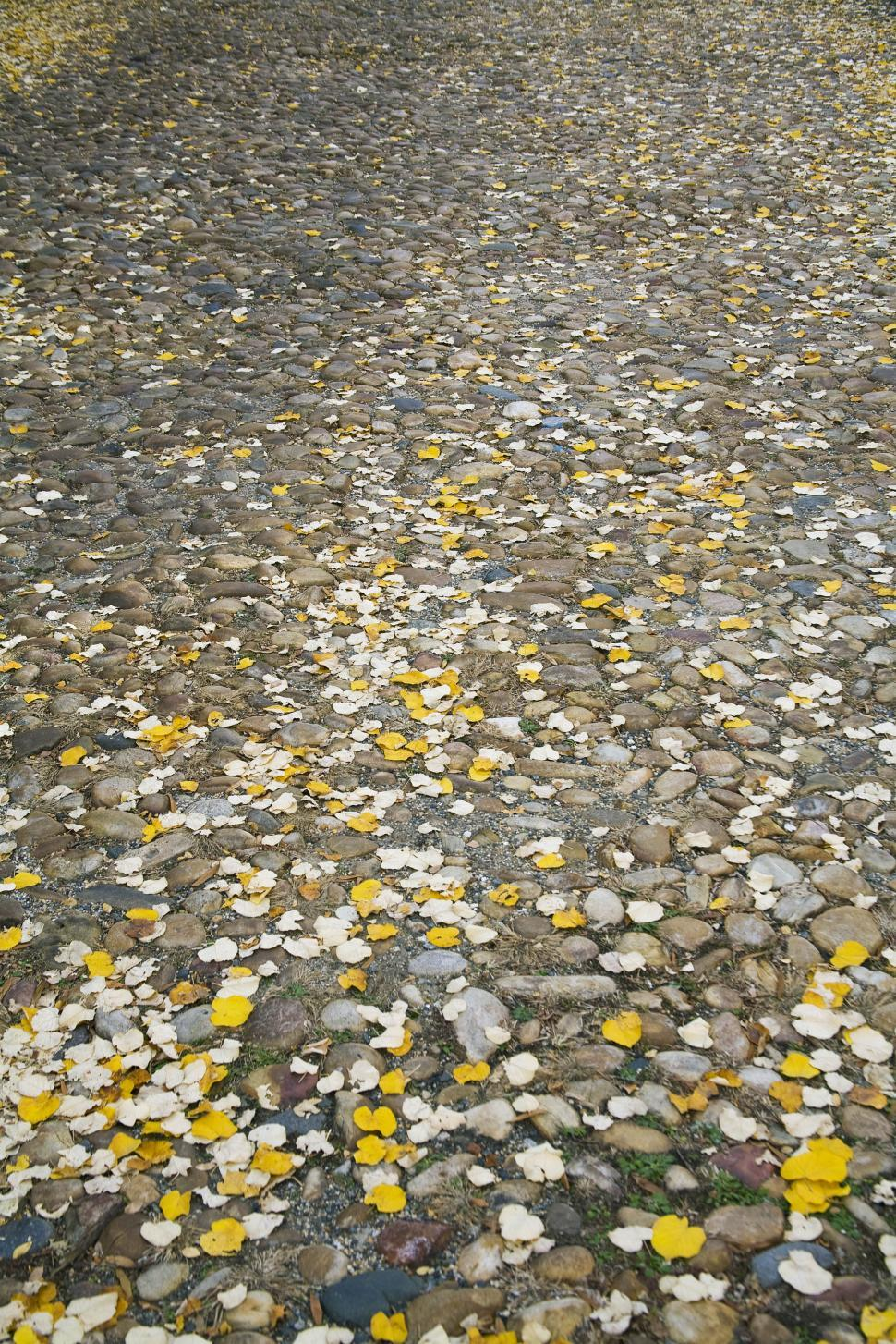 Download Free Stock HD Photo of  leaves on a stone path Online