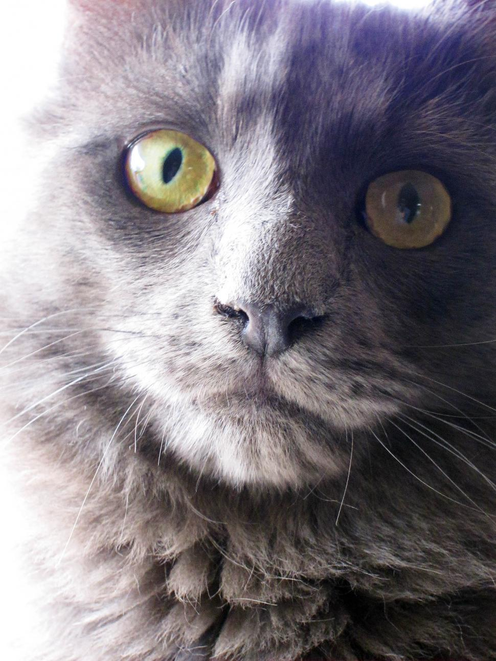 Download Free Stock HD Photo of Cat face Online