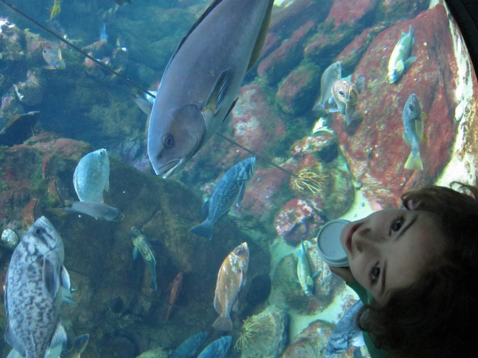 Download Free Stock HD Photo of Girl watching fish Online