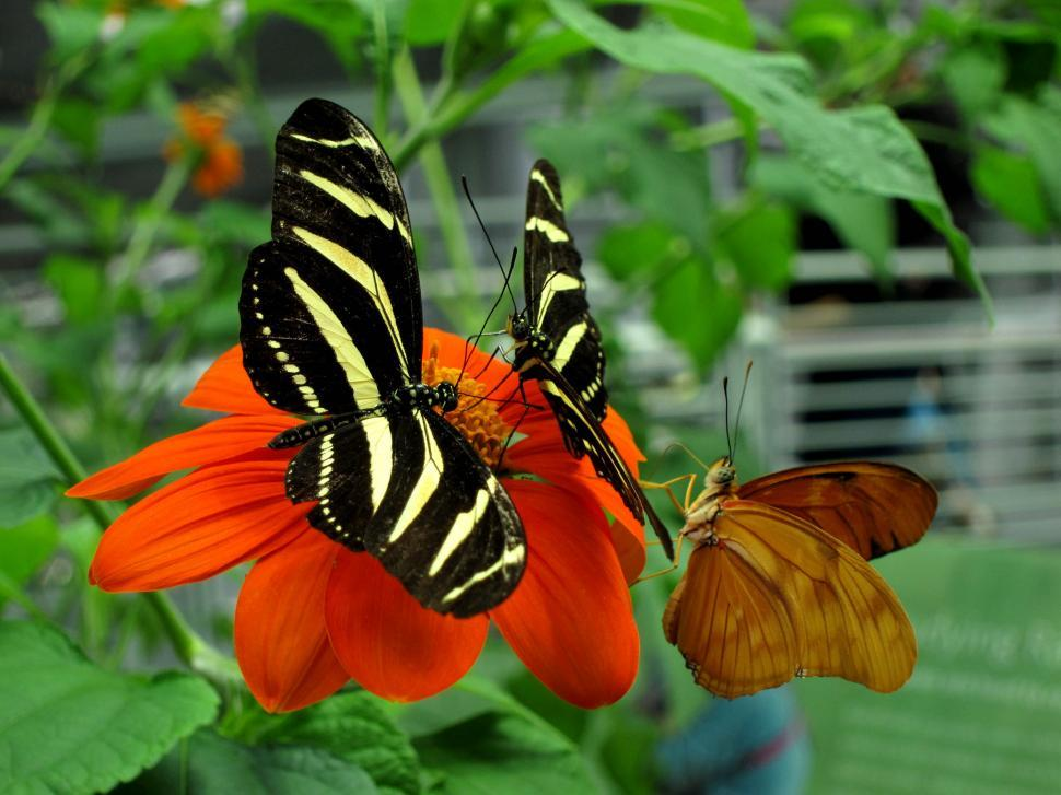 Download Free Stock HD Photo of Butterflies Online