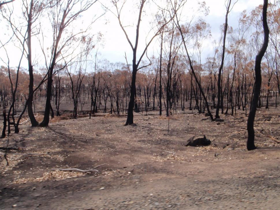 Download Free Stock HD Photo of After the Bushfire Online