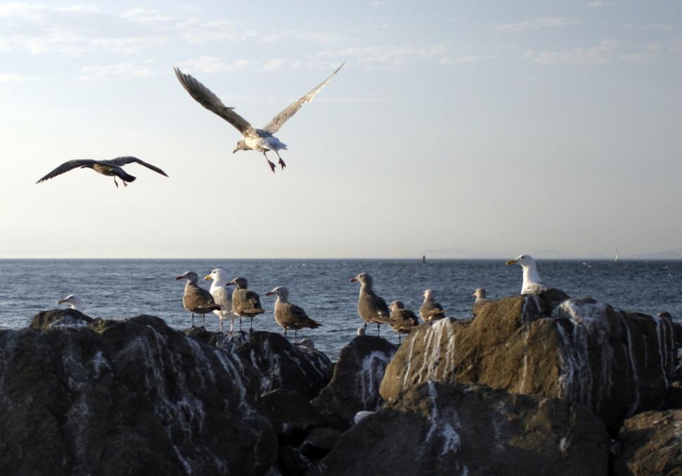 Download Free Stock HD Photo of Seagulls Online