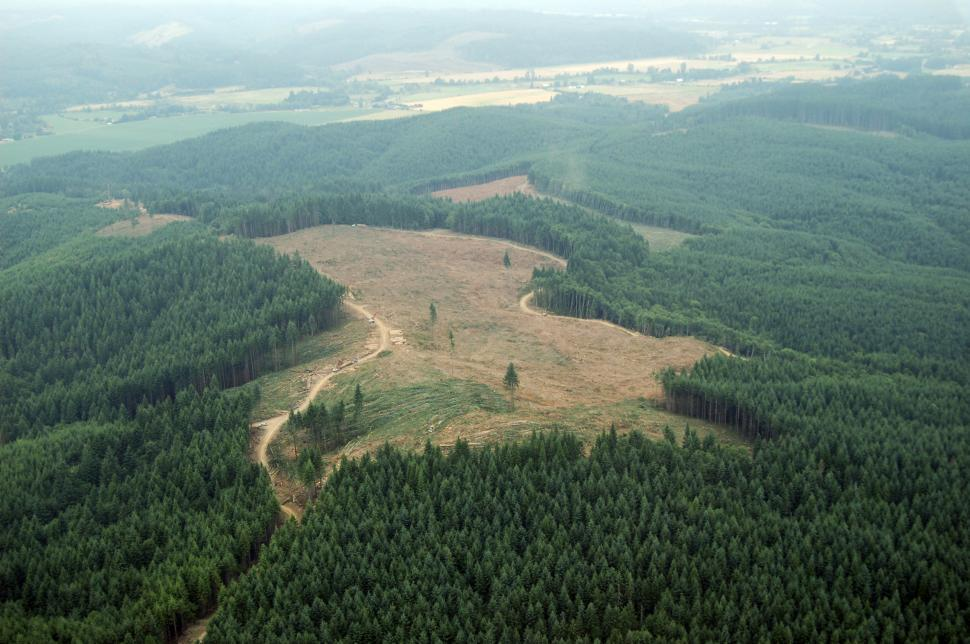 Download Free Stock HD Photo of Clearcut Logging Online