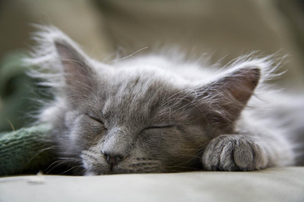 Download Free Stock HD Photo of Sleeping cat Online