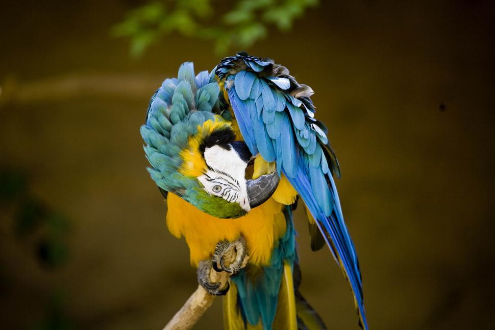 Download Free Stock HD Photo of Colorful Parrot Online