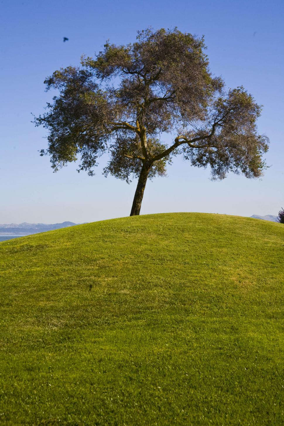 Download Free Stock HD Photo of Scenic Tree Online