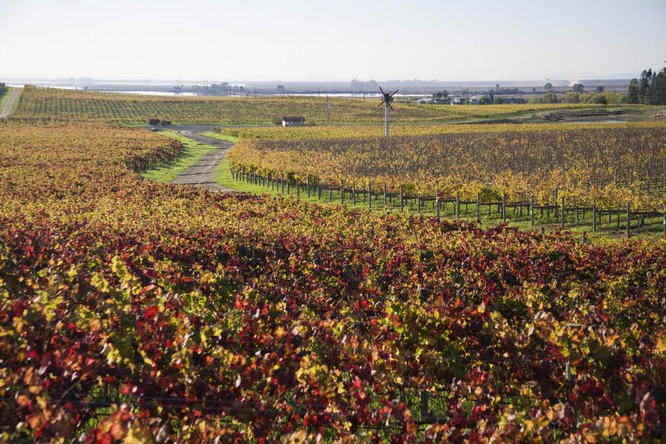 Download Free Stock HD Photo of Vineyard road Online
