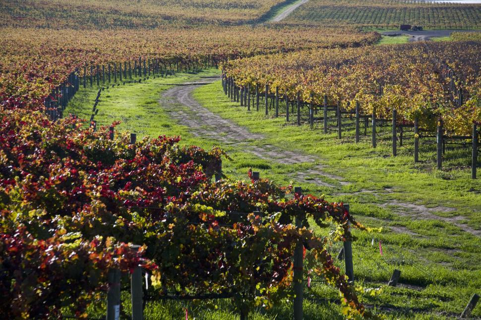 Download Free Stock HD Photo of Vineyard rows Online