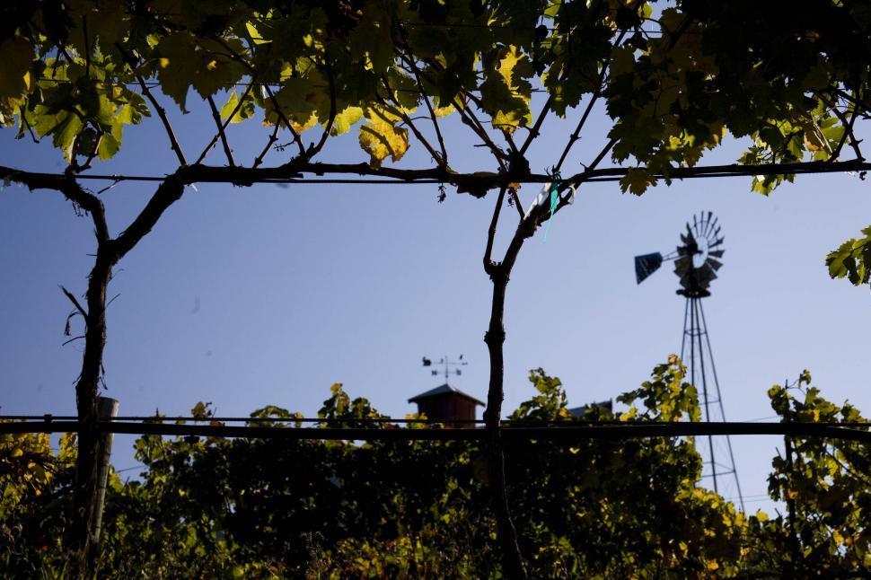 Download Free Stock HD Photo of Vineyard Online