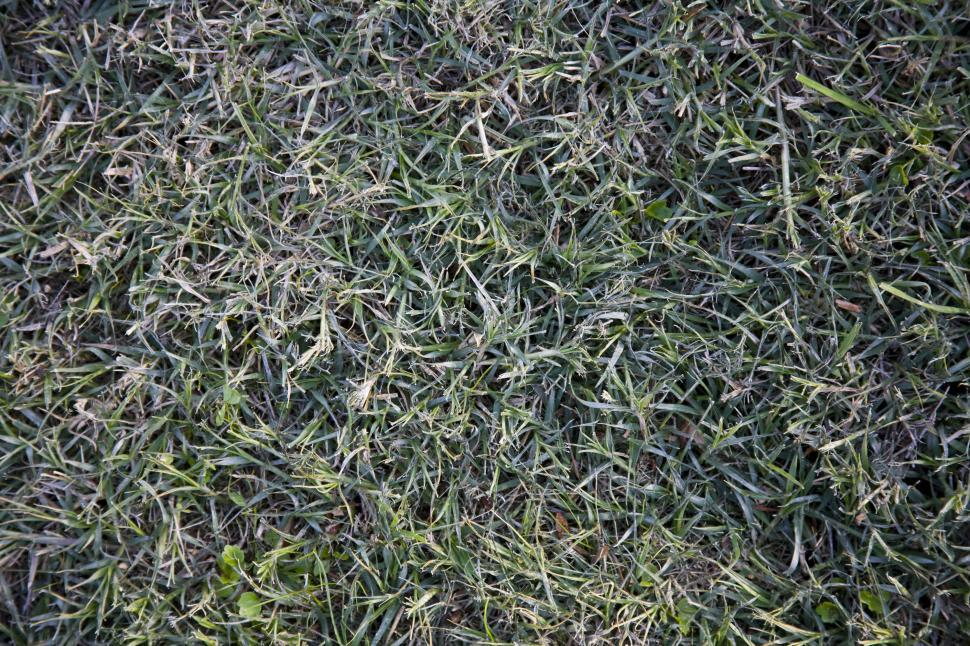 Download Free Stock HD Photo of Grass Online