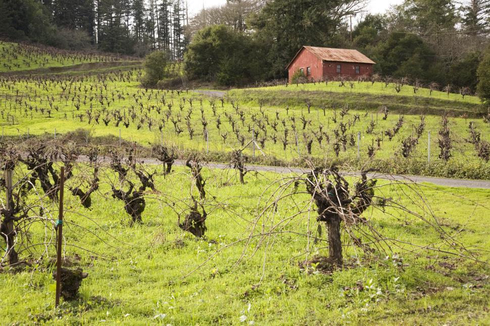 Download Free Stock HD Photo of Field of grape vines Online