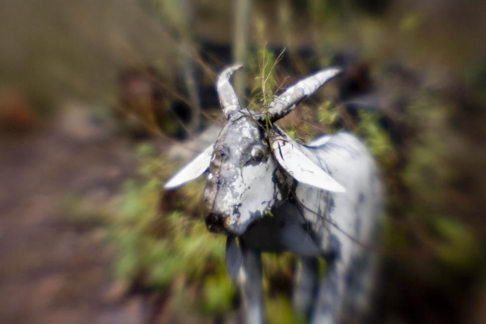 Download Free Stock HD Photo of Blurry Goat sculpture Online