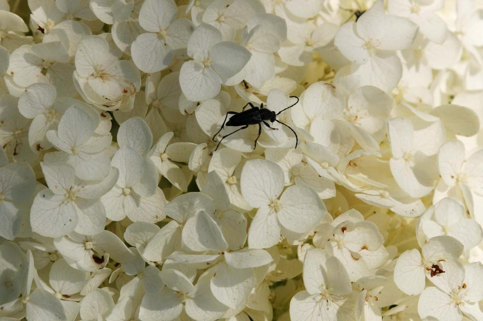 Download Free Stock HD Photo of Bug on the flowers Online