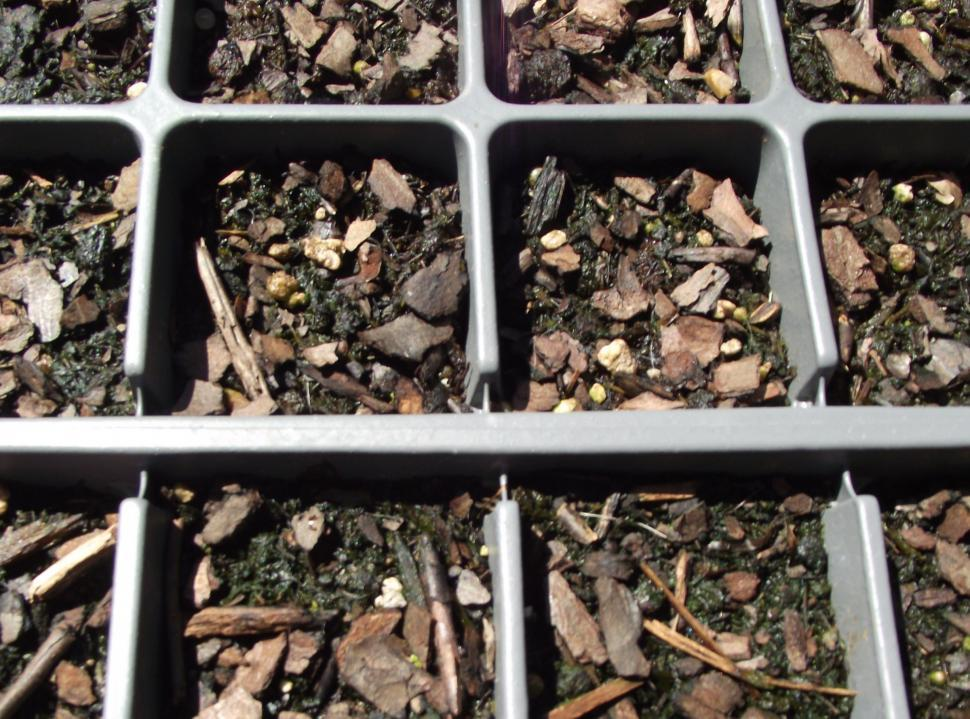Nursery Planting Seed Trays Full Of Dirt