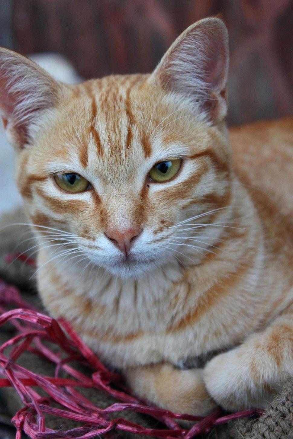 Download Free Stock HD Photo of Orange Cat Online