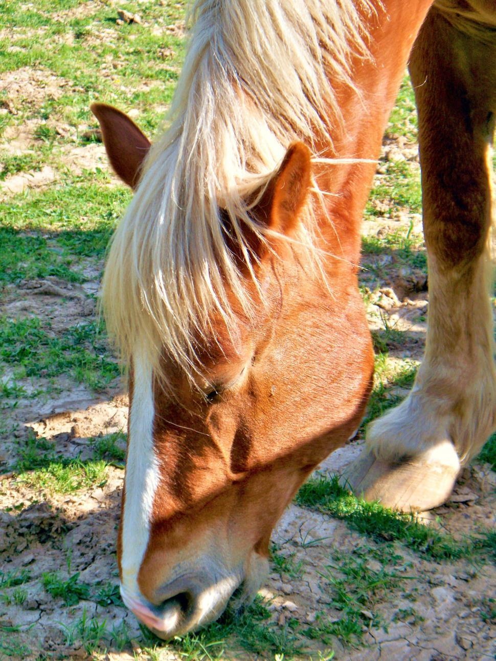 Download Free Stock HD Photo of Beautiful Horse Head and Mane Online