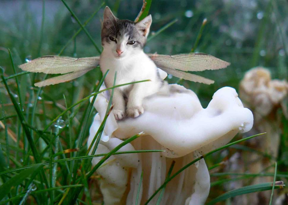 Download Free Stock HD Photo of Fairy kitten on a mushroom Online