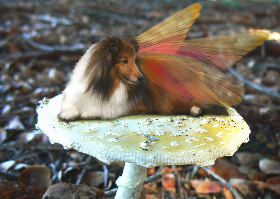 Download Free Stock HD Photo of Sheltie Fairy Dog on a Mushroom Online