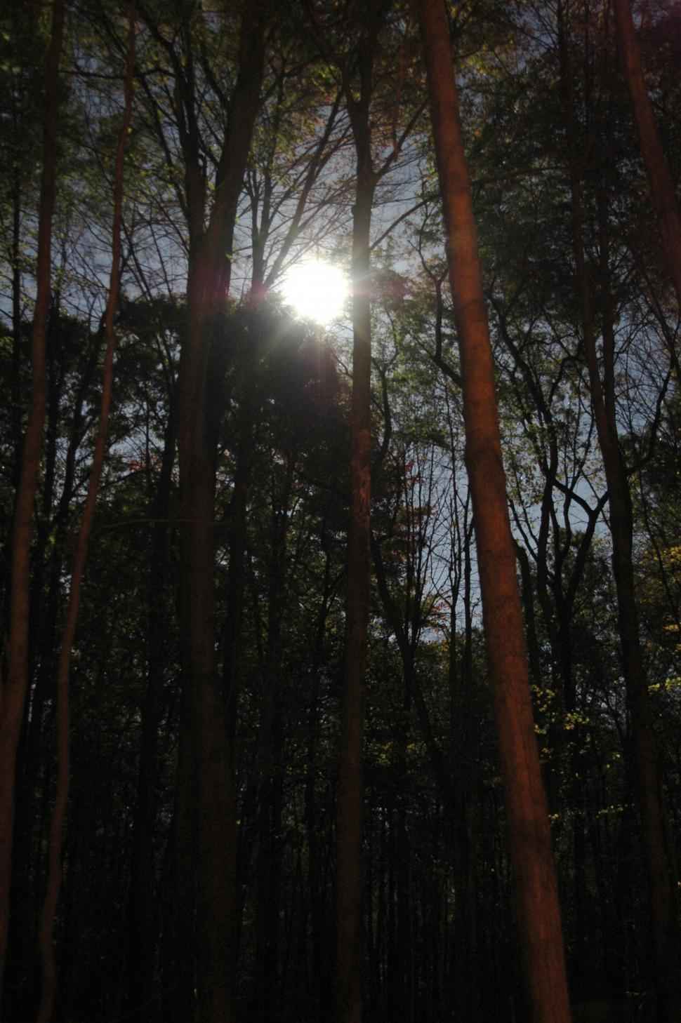 Download Free Stock HD Photo of Forest Moon Online