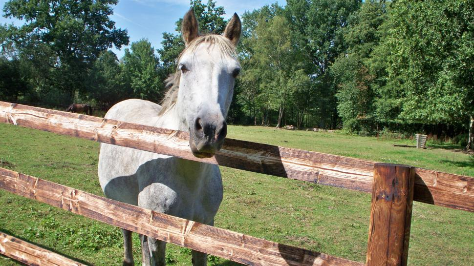 Download Free Stock HD Photo of Horse Saying Hello Online