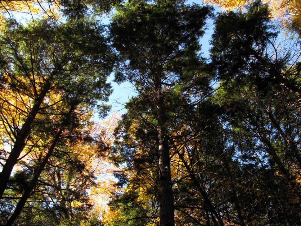 Download Free Stock HD Photo of Fall Pines Online
